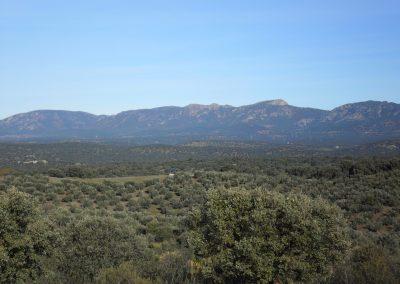 Cerro de los Tomillos